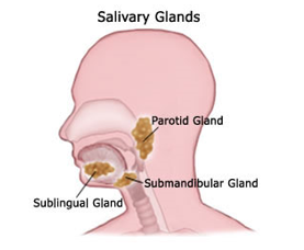 Suburban Ear, Nose and Throat Associates